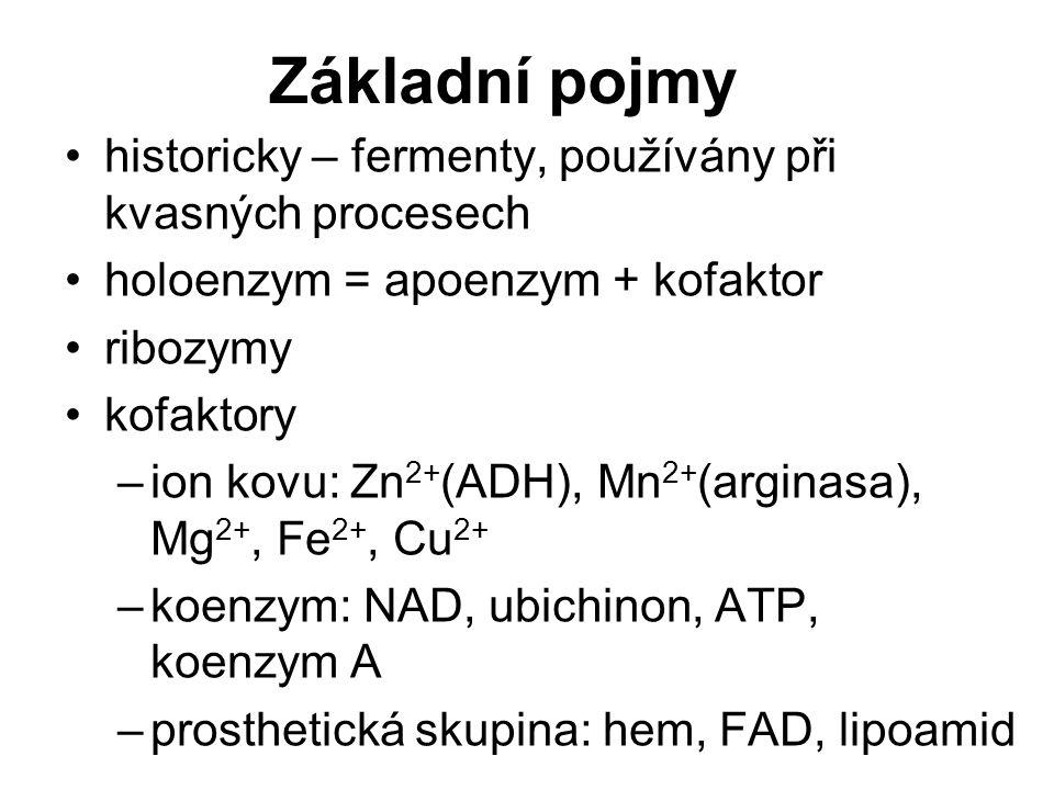 Základní pojmy historicky – fermenty, používány při kvasných procesech holoenzym = apoenzym + kofaktor ribozymy kofaktory –ion kovu: Zn 2+ (ADH), Mn 2