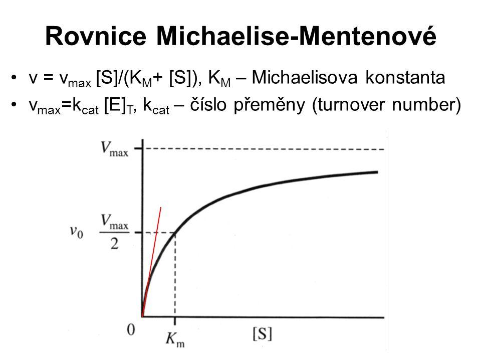 Rovnice Michaelise-Mentenové v = v max [S]/(K M + [S]), K M – Michaelisova konstanta v max =k cat [E] T, k cat – číslo přeměny (turnover number)