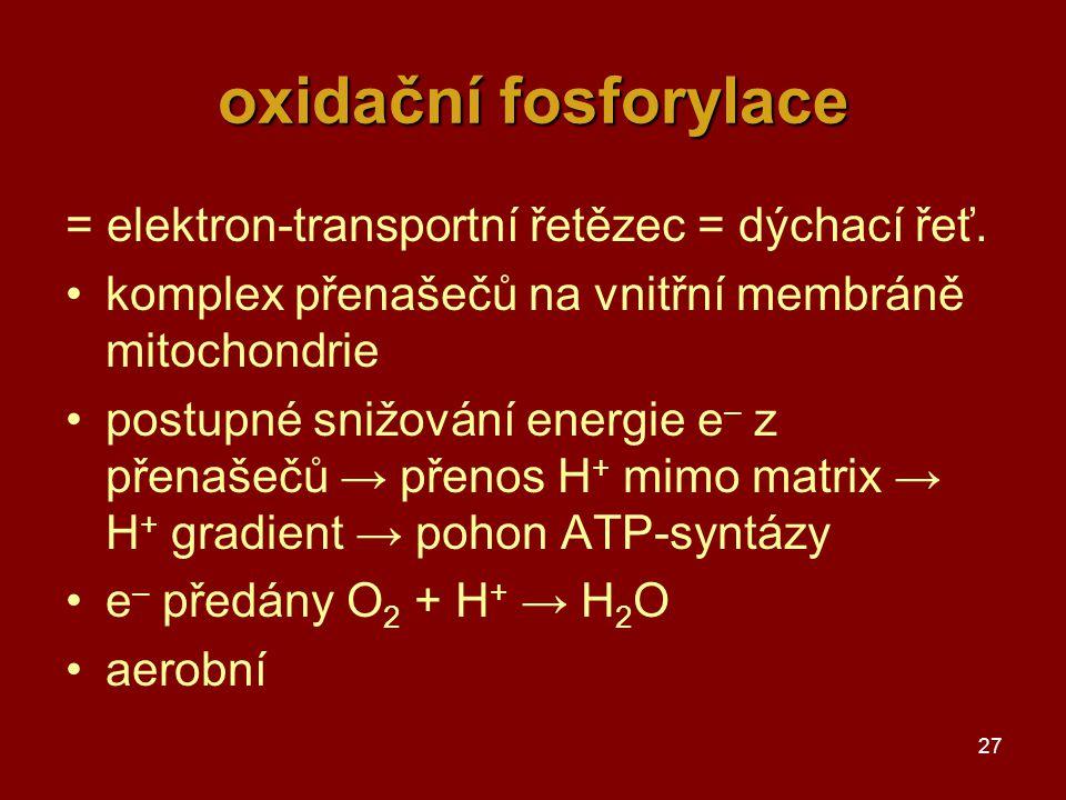 27 oxidační fosforylace = elektron-transportní řetězec = dýchací řeť. komplex přenašečů na vnitřní membráně mitochondrie postupné snižování energie e