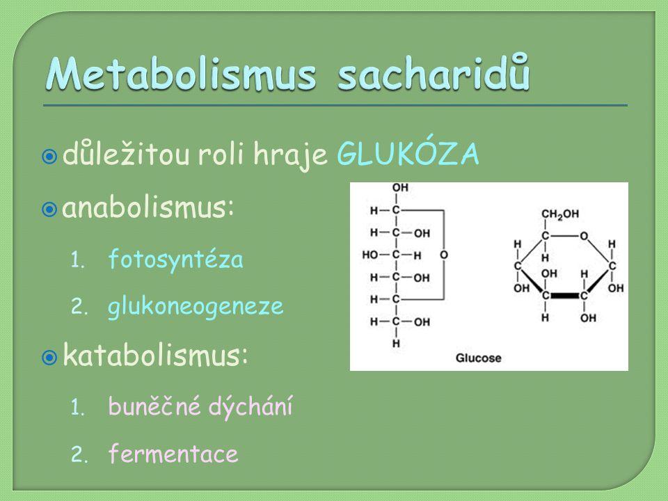  důležitou roli hraje GLUKÓZA  anabolismus: 1. fotosyntéza 2. glukoneogeneze  katabolismus: 1. buněčné dýchání 2. fermentace