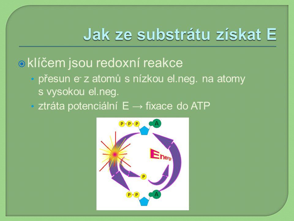  klíčem jsou redoxní reakce přesun e - z atomů s nízkou el.neg. na atomy s vysokou el.neg. ztráta potenciální E → fixace do ATP
