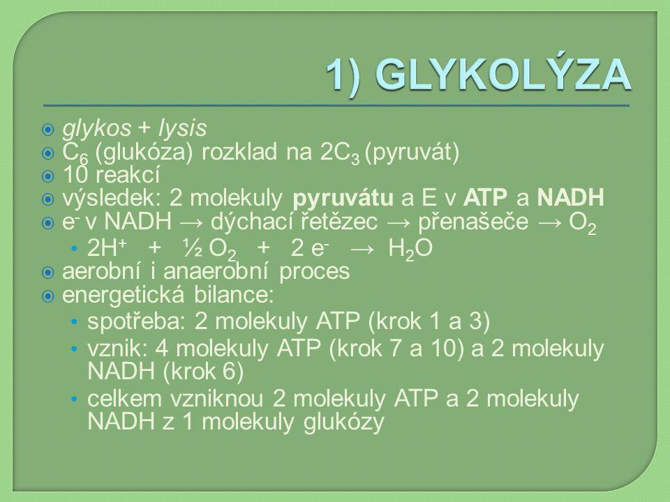  glykos + lysis  C 6 (glukóza) rozklad na 2C 3 (pyruvát)  10 reakcí  výsledek: 2 molekuly pyruvátu a E v ATP a NADH  e - v NADH → dýchací řetězec