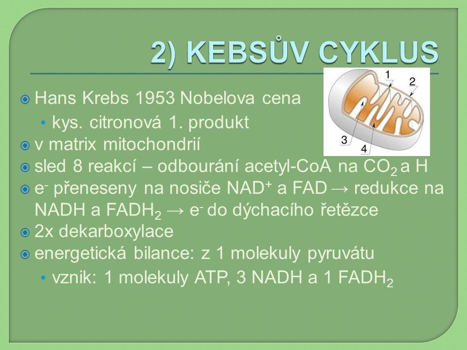  Hans Krebs 1953 Nobelova cena kys. citronová 1. produkt  v matrix mitochondrií  sled 8 reakcí – odbourání acetyl-CoA na CO 2 a H  e - přeneseny n