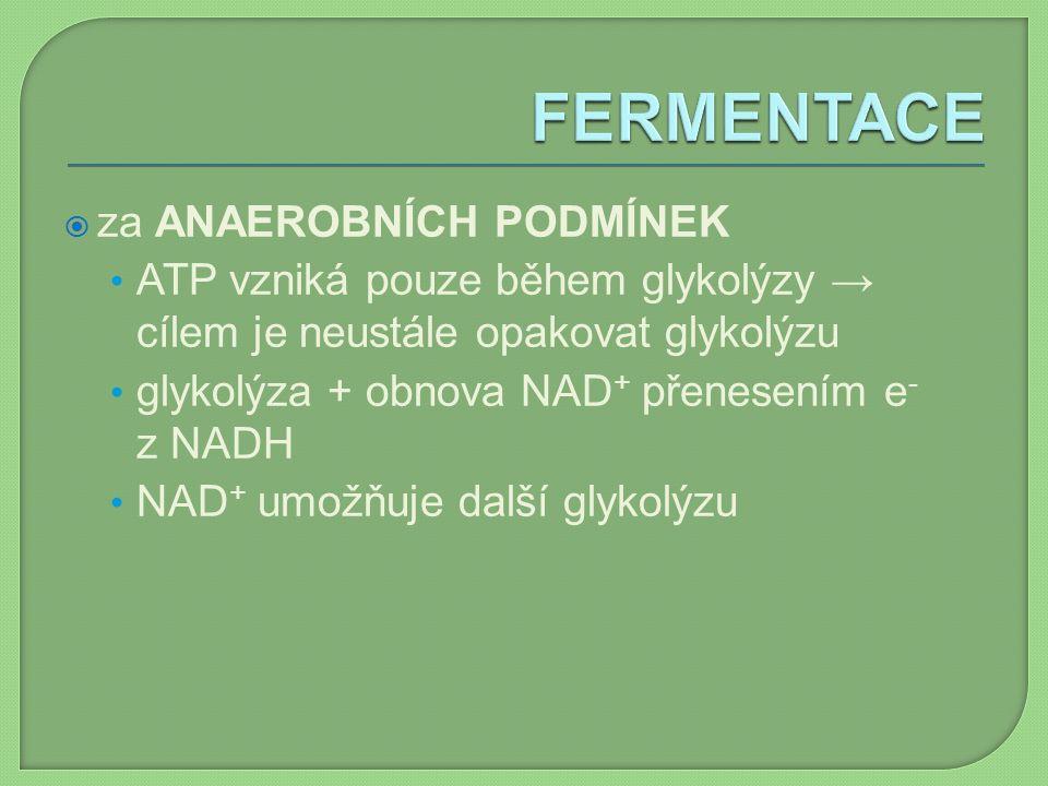  za ANAEROBNÍCH PODMÍNEK ATP vzniká pouze během glykolýzy → cílem je neustále opakovat glykolýzu glykolýza + obnova NAD + přenesením e - z NADH NAD +