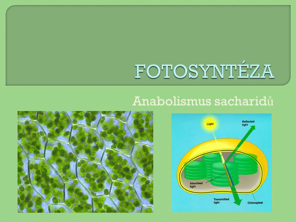  přeměna světelné E na chemickou  hlavní producent O 2  v chloroplastech  základní podmínka života na Zemi  6 CO 2 + 12 H 2 O → C 6 H 12 O 6 + 6 H 2 O + 6 O 2 katalyzátor: chlorofyl a světlo  2 fáze: světelná + temnostní