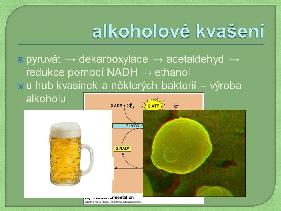  pyruvát → dekarboxylace → acetaldehyd → redukce pomocí NADH → ethanol  u hub kvasinek a některých bakterií – výroba alkoholu