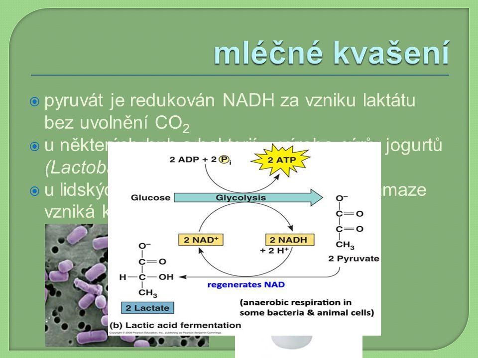  pyruvát je redukován NADH za vzniku laktátu bez uvolnění CO 2  u některých hub a bakterií – výroba sýrů, jogurtů (Lactobacillus bulgaricus)  u lid