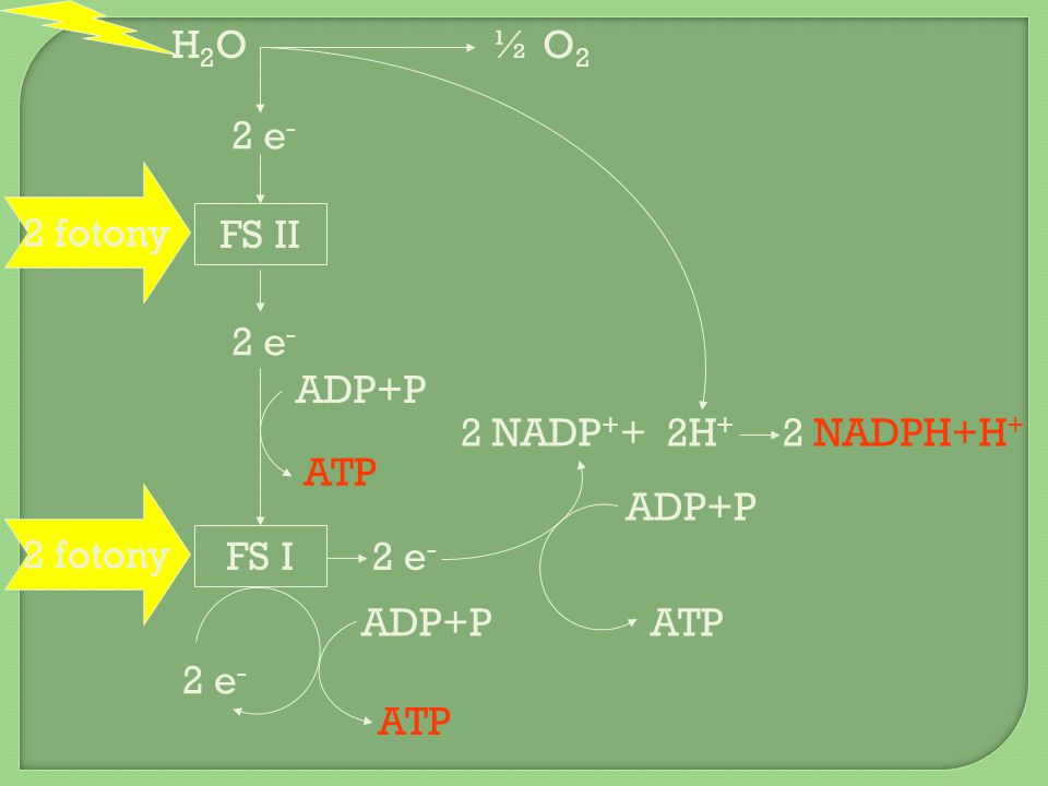 za ANAEROBNÍCH PODMÍNEK ATP vzniká pouze během glykolýzy → cílem je neustále opakovat glykolýzu glykolýza + obnova NAD + přenesením e - z NADH NAD + umožňuje další glykolýzu