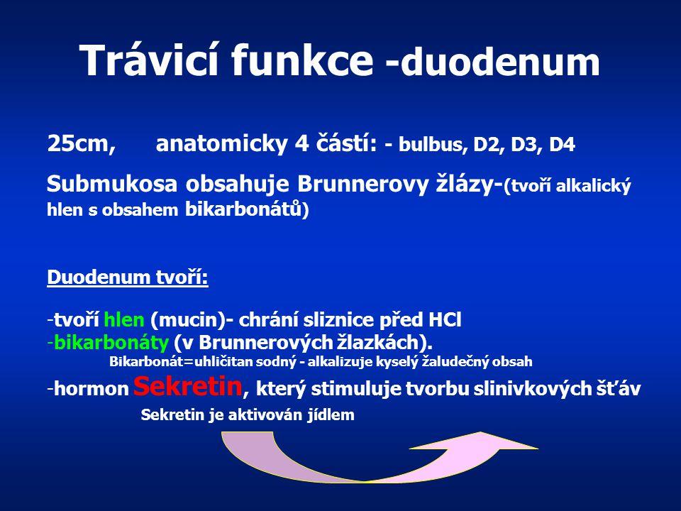 Žaludek Buňky -hlenu Buňky - lipázy Buňky - pepsin ogen B. parietální - HCl Buňky - gastrinu