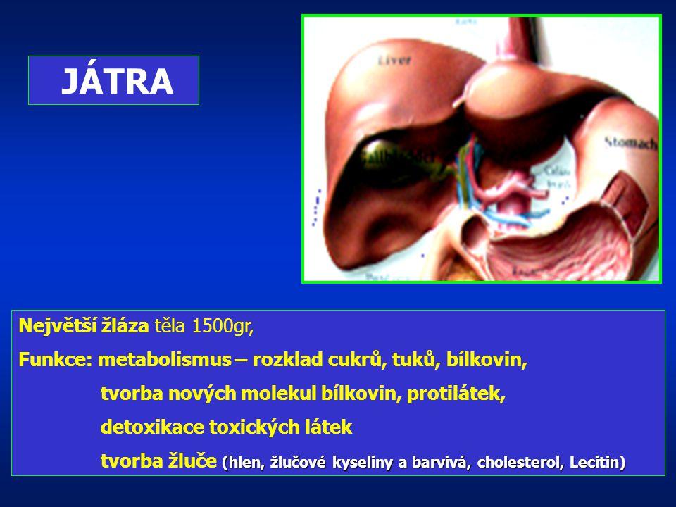 Má funkci: Exokrinní + endokrinní 1,5 milionů Langerhansových ostrůvků -produkují Insulin = rovnováha glykémie (hladiny cukru v krvi)