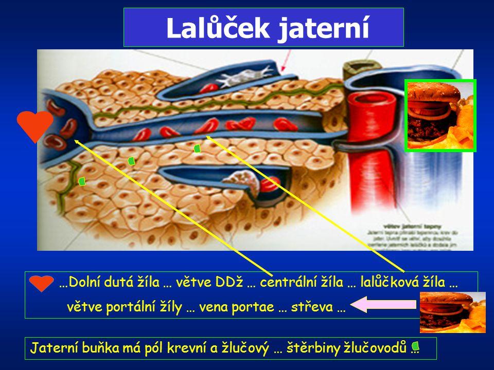 JÁTRA Největší žláza těla 1500gr, Funkce: metabolismus – rozklad cukrů, tuků, bílkovin, tvorba nových molekul bílkovin, protilátek, detoxikace toxický