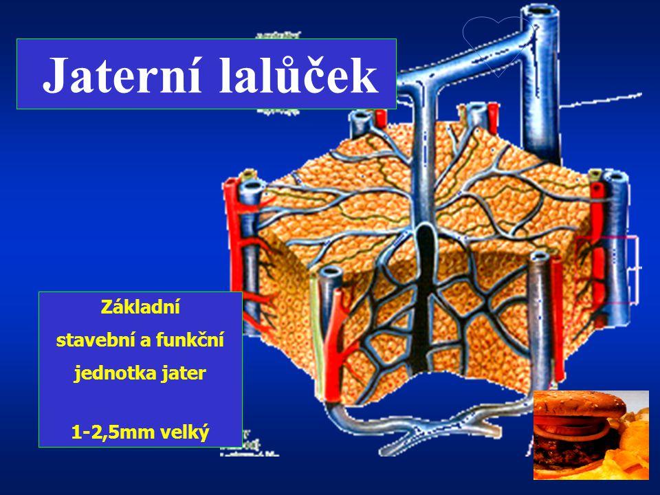 Lalůček jaterní …Dolní dutá žíla … větve DDž … centrální žíla … lalůčková žíla … větve portální žíly … vena portae … střeva … Jaterní buňka má pól kre
