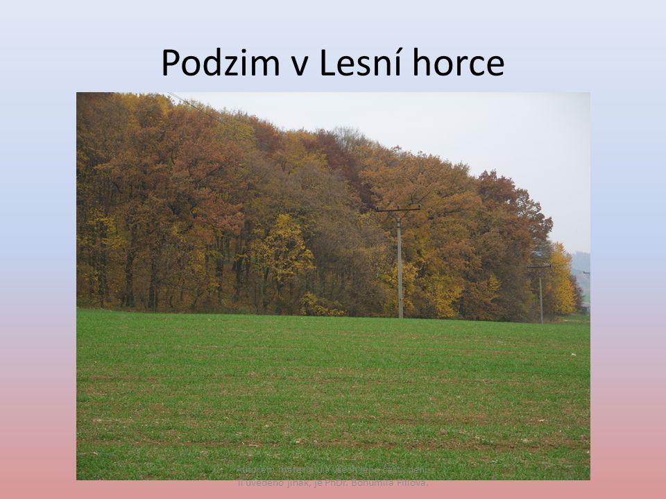 Podzim v Lesní horce Autorem materiálu a všech jeho částí, není- li uvedeno jinak, je PhDr.