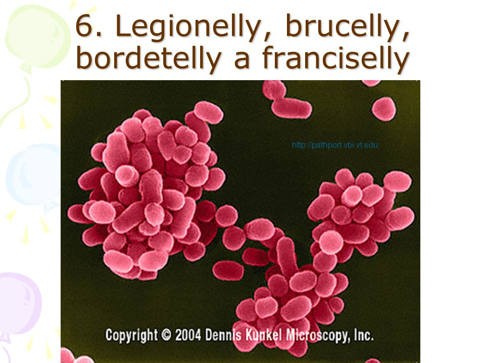 6. Legionelly, brucelly, bordetelly a franciselly http://pathport.vbi.vt.edu