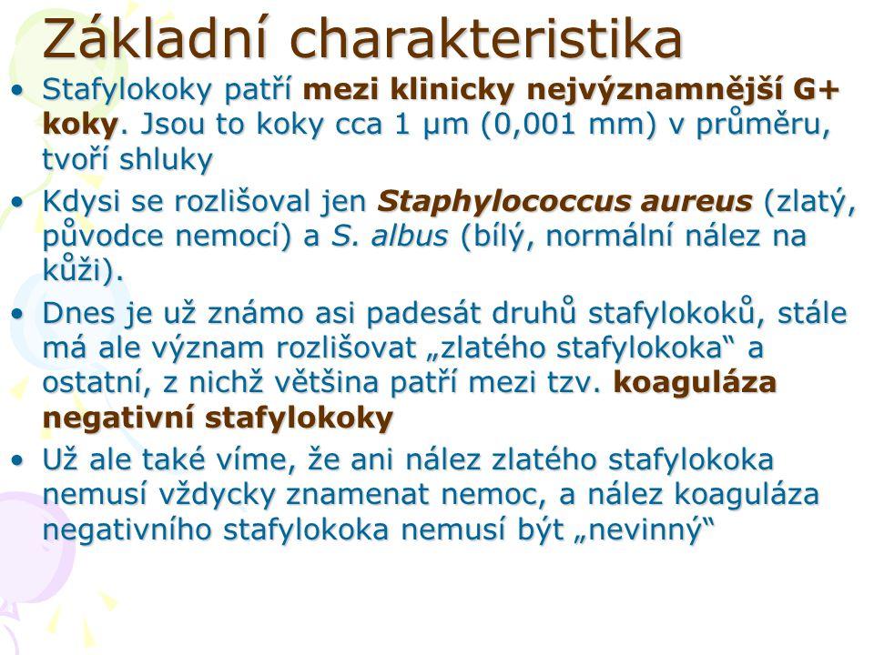 Základní charakteristika Stafylokoky patří mezi klinicky nejvýznamnější G+ koky. Jsou to koky cca 1 µm (0,001 mm) v průměru, tvoří shlukyStafylokoky p