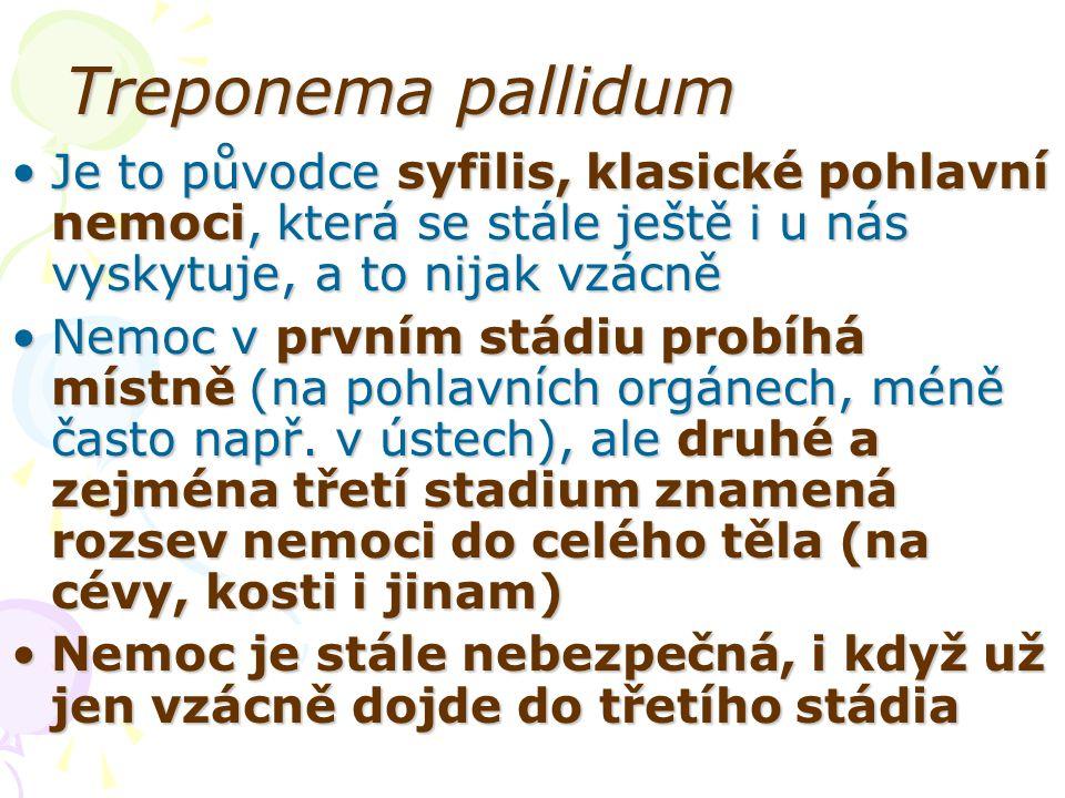 Treponema pallidum Je to původce syfilis, klasické pohlavní nemoci, která se stále ještě i u nás vyskytuje, a to nijak vzácněJe to původce syfilis, kl