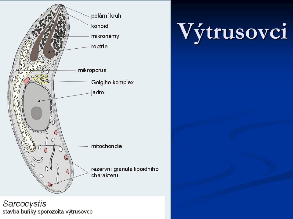 Toxoplasma Způsobuje nemoc podobnou chřipce.Způsobuje nemoc podobnou chřipce.