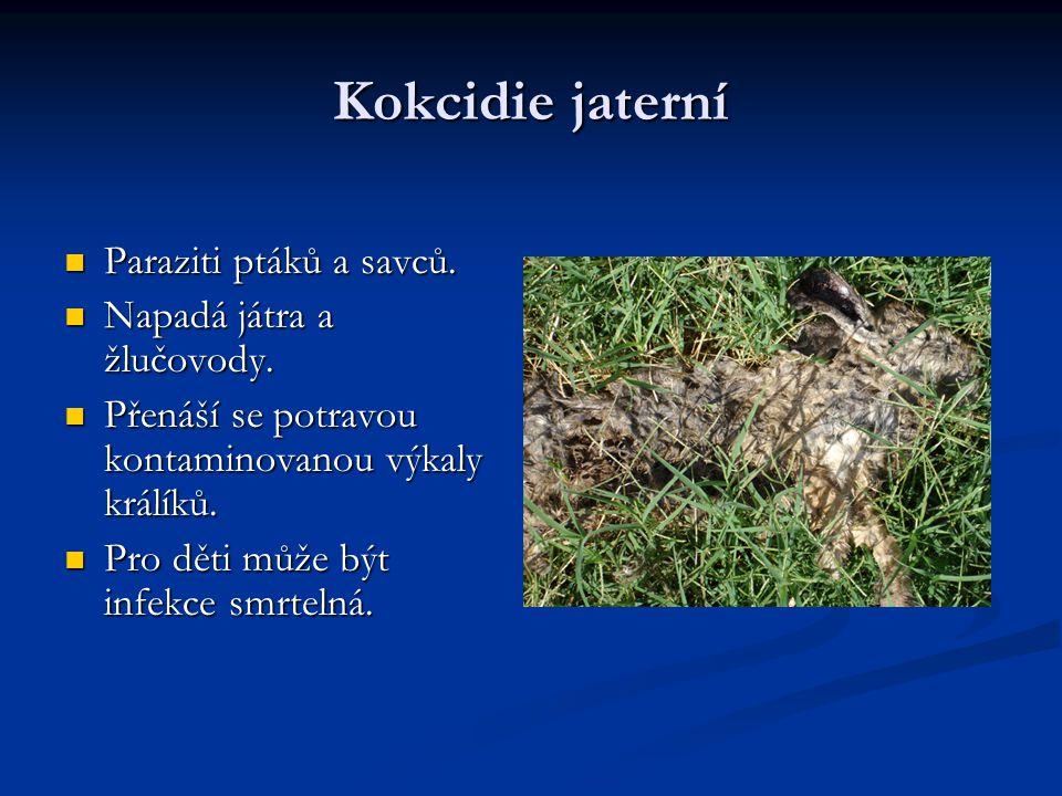 Kokcidie jaterní Paraziti ptáků a savců.Paraziti ptáků a savců.