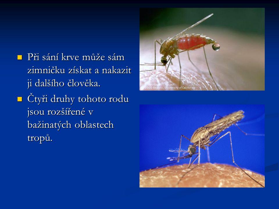 Komár Anopheles