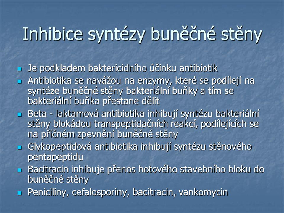 Inhibice syntézy buněčné stěny Je podkladem baktericidního účinku antibiotik Je podkladem baktericidního účinku antibiotik Antibiotika se navážou na e
