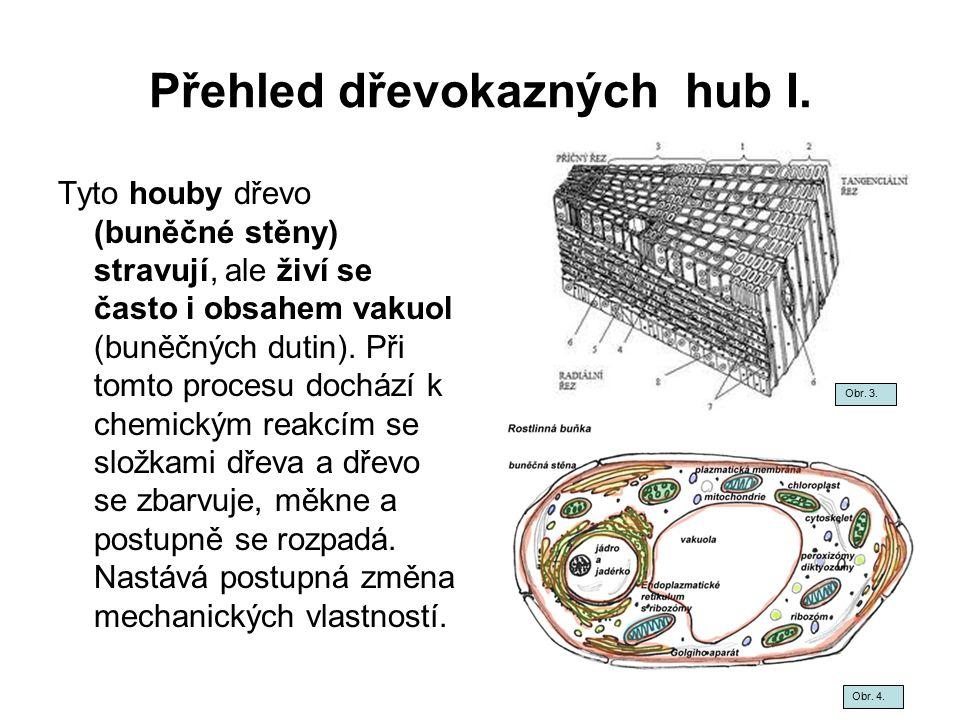 Přehled dřevokazných hub I. Tyto houby dřevo (buněčné stěny) stravují, ale živí se často i obsahem vakuol (buněčných dutin). Při tomto procesu dochází