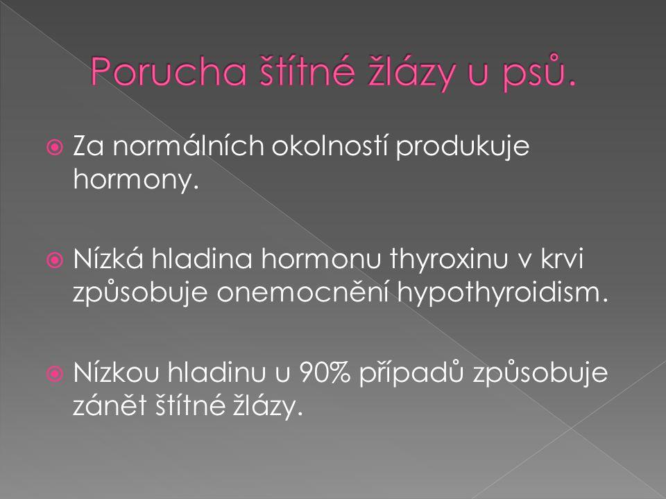  Za normálních okolností produkuje hormony.