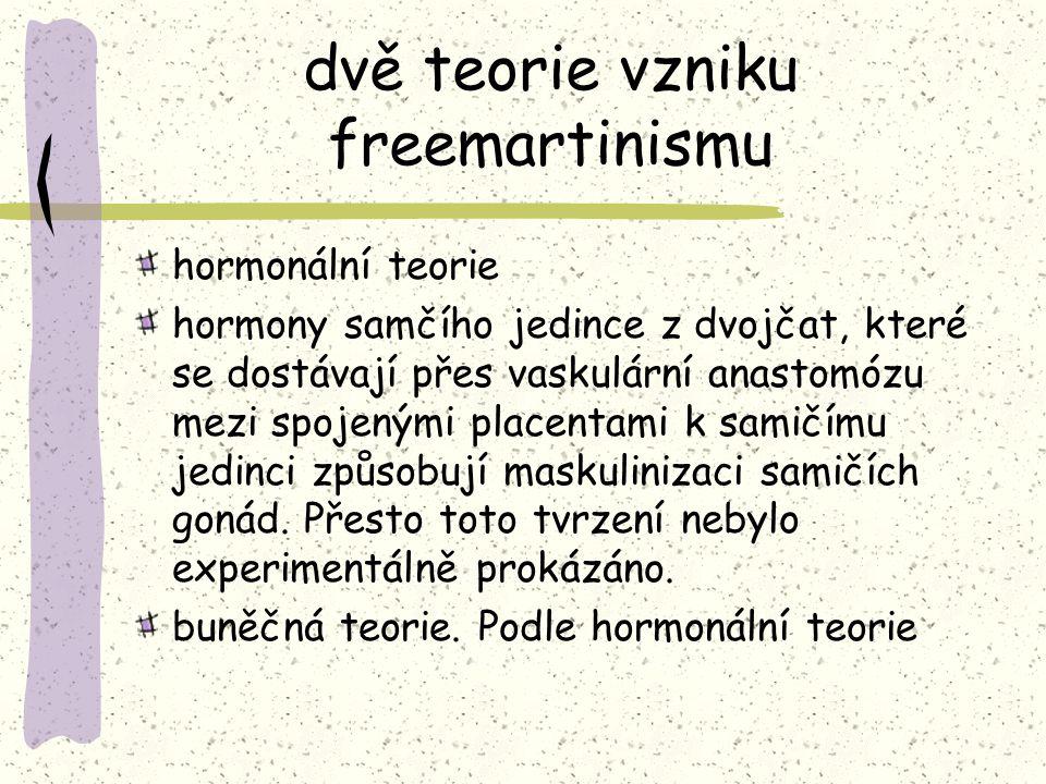 dvě teorie vzniku freemartinismu hormonální teorie hormony samčího jedince z dvojčat, které se dostávají přes vaskulární anastomózu mezi spojenými pla