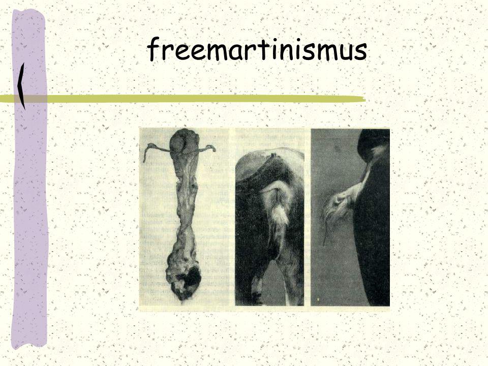 freemartinismus