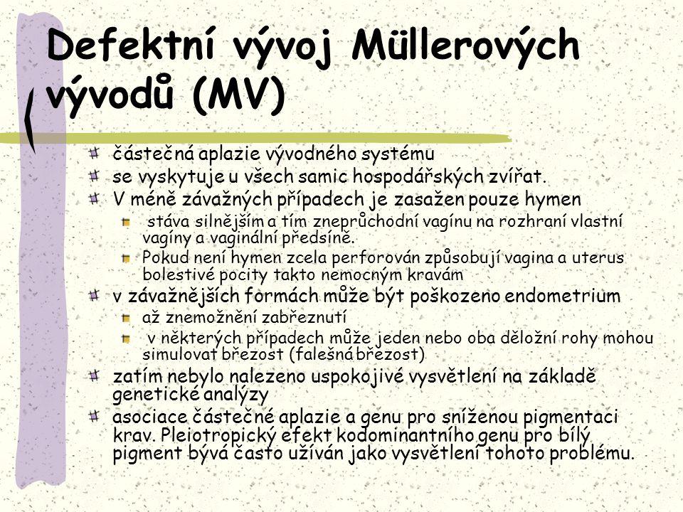 Defektní vývoj Müllerových vývodů (MV) částečná aplazie vývodného systému se vyskytuje u všech samic hospodářských zvířat.