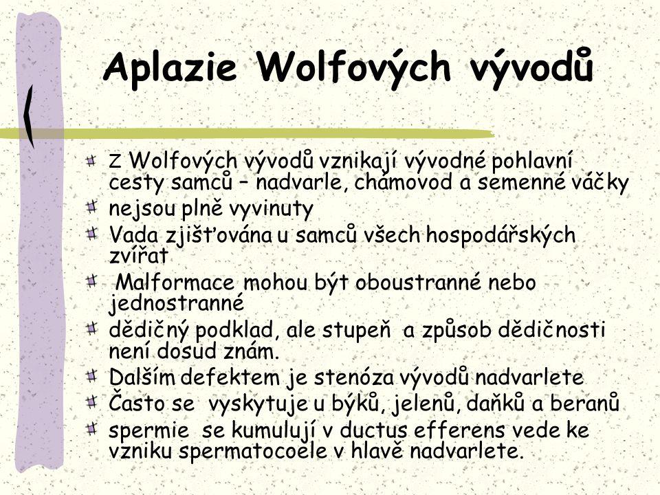 Aplazie Wolfových vývodů Z Wolfových vývodů vznikají vývodné pohlavní cesty samců – nadvarle, chámovod a semenné váčky nejsou plně vyvinuty Vada zjišťována u samců všech hospodářských zvířat Malformace mohou být oboustranné nebo jednostranné dědičný podklad, ale stupeň a způsob dědičnosti není dosud znám.