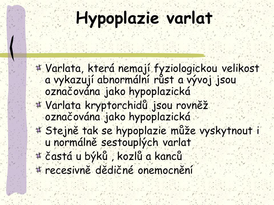 Hypoplazie varlat Varlata, která nemají fyziologickou velikost a vykazují abnormální růst a vývoj jsou označována jako hypoplazická Varlata kryptorchidů jsou rovněž označována jako hypoplazická Stejně tak se hypoplazie může vyskytnout i u normálně sestouplých varlat častá u býků, kozlů a kanců recesivně dědičné onemocnění