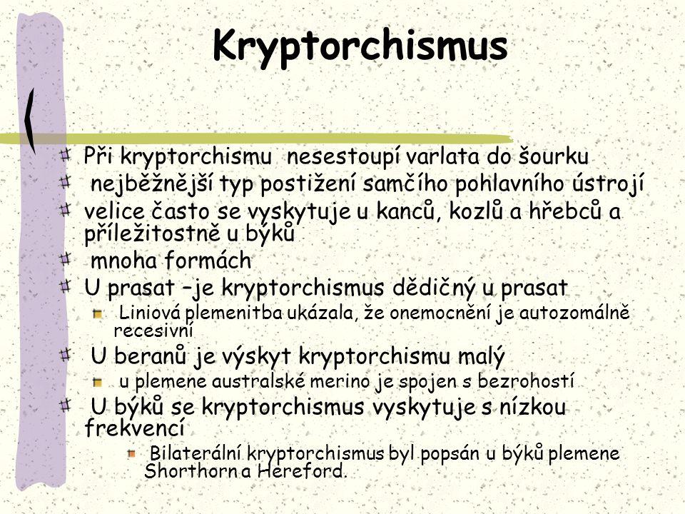 Kryptorchismus Při kryptorchismu nesestoupí varlata do šourku nejběžnější typ postižení samčího pohlavního ústrojí velice často se vyskytuje u kanců, kozlů a hřebců a příležitostně u býků mnoha formách U prasat –je kryptorchismus dědičný u prasat Liniová plemenitba ukázala, že onemocnění je autozomálně recesivní U beranů je výskyt kryptorchismu malý u plemene australské merino je spojen s bezrohostí U býků se kryptorchismus vyskytuje s nízkou frekvencí Bilaterální kryptorchismus byl popsán u býků plemene Shorthorn a Hereford.