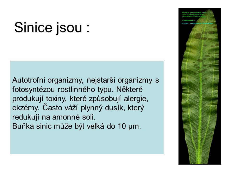 Sinice jsou : Autotrofní organizmy, nejstarší organizmy s fotosyntézou rostlinného typu. Některé produkují toxiny, které způsobují alergie, ekzémy. Ča