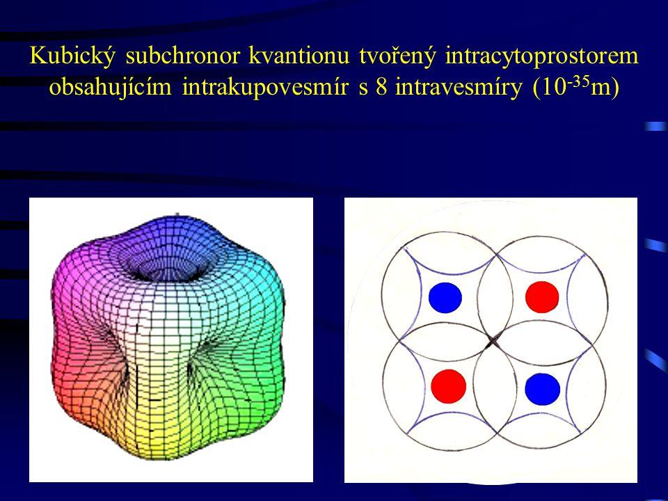 Kubický subchronor kvantionu tvořený intracytoprostorem obsahujícím intrakupovesmír s 8 intravesmíry (10 -35 m)