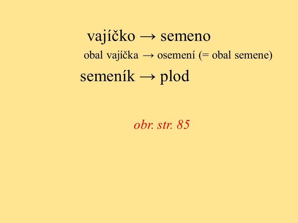 vajíčko → semeno obal vajíčka → osemení (= obal semene) semeník → plod obr. str. 85