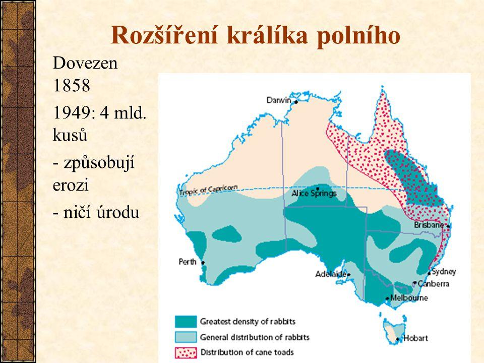 19 Rozšíření králíka polního Dovezen 1858 1949: 4 mld. kusů - způsobují erozi - ničí úrodu