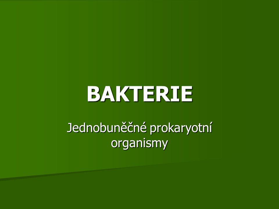 BAKTERIE Jednobuněčné prokaryotní organismy
