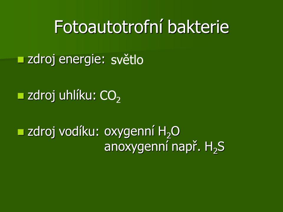 Fotoautotrofní bakterie zdroj energie: zdroj energie: zdroj uhlíku: zdroj uhlíku: zdroj vodíku: zdroj vodíku: světlo CO 2 oxygenní H 2 O anoxygenní např.