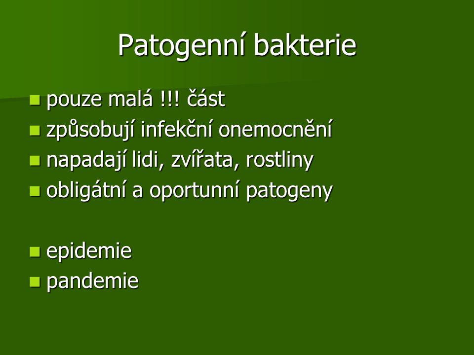 Patogenní bakterie pouze malá !!.část pouze malá !!.