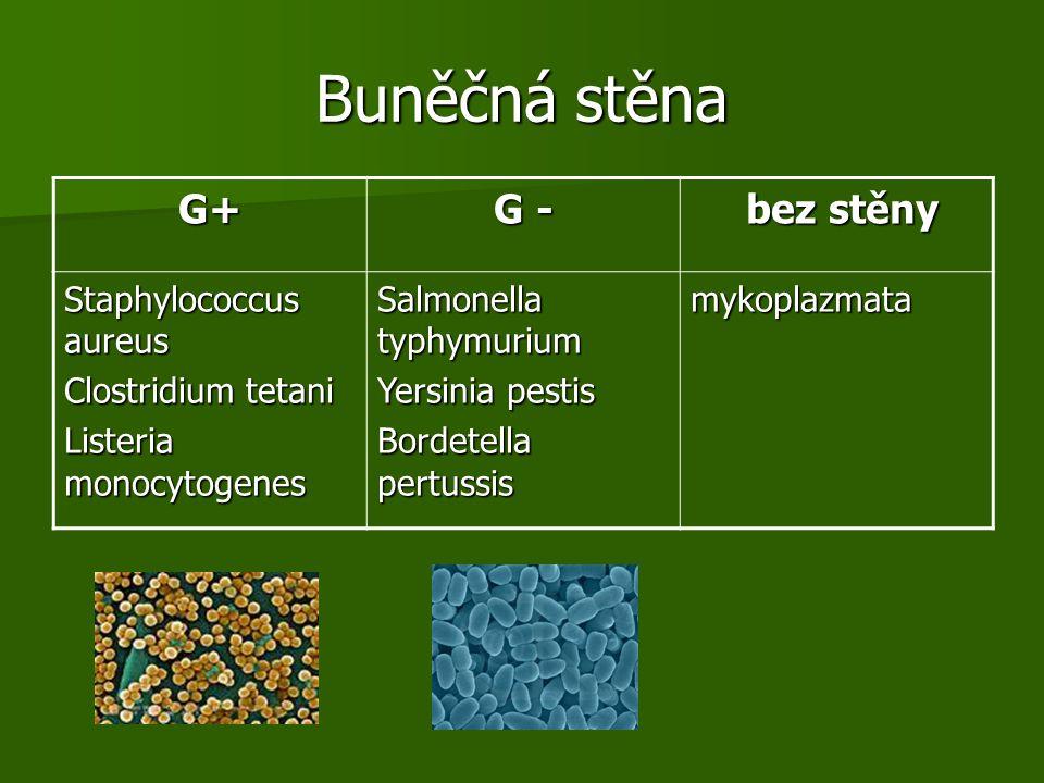 Buněčná stěna G+ G - bez stěny bez stěny Staphylococcus aureus Clostridium tetani Listeria monocytogenes Salmonella typhymurium Yersinia pestis Bordetella pertussis mykoplazmata