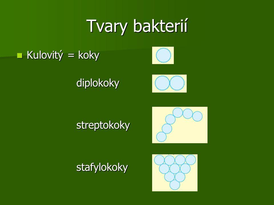 Tvary bakterií Kulovitý = koky Kulovitý = koky diplokoky diplokoky streptokoky streptokoky stafylokoky stafylokoky