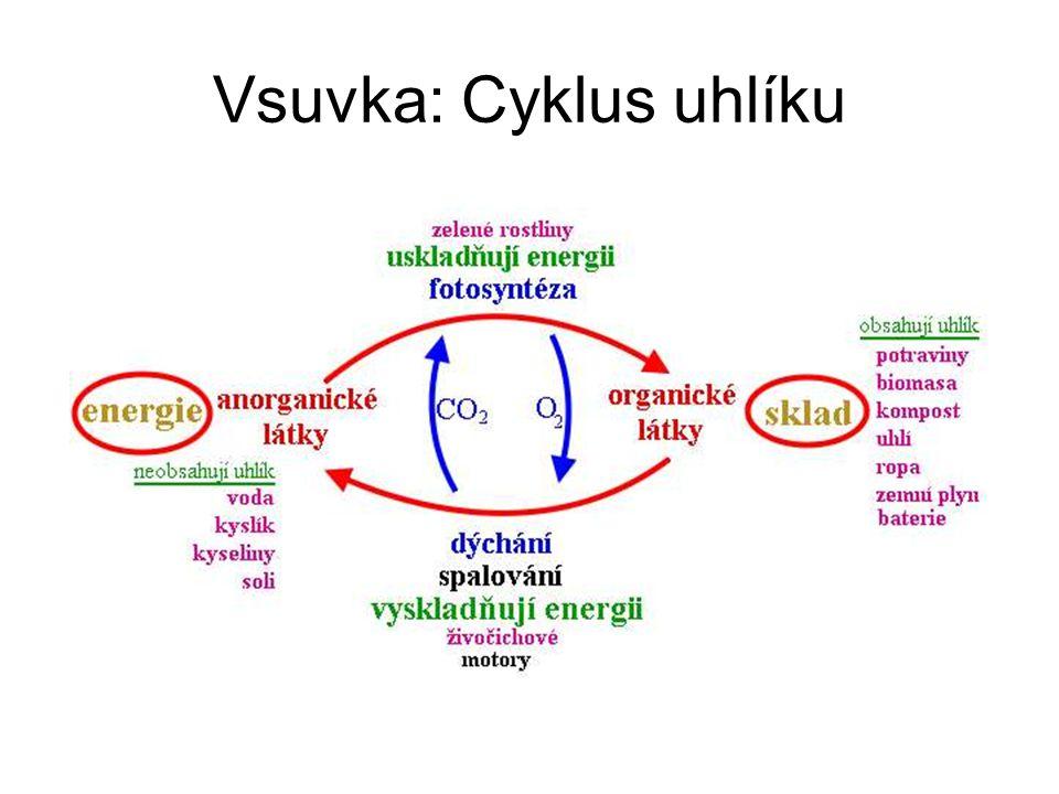 Vsuvka: Cyklus uhlíku