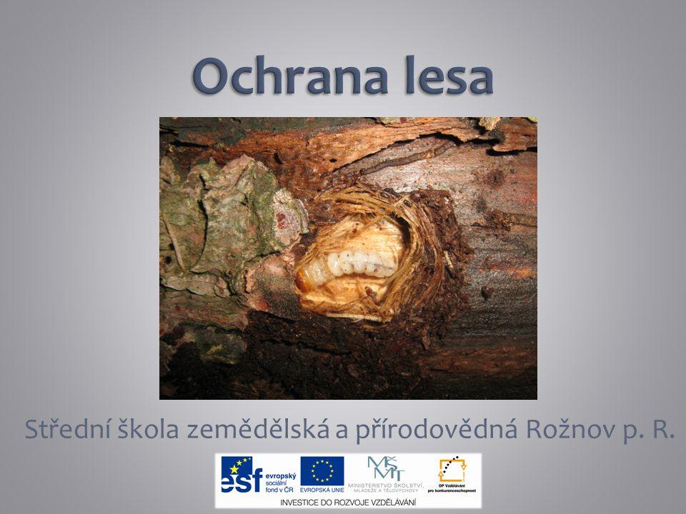 Ochrana lesa zjišťuje zdravotní stav lesa, určuje příčinu poškození či zničení lesního porostu a stanovuje opatření k nápravě škod a k jejich předcházení Les chráníme před tzv.