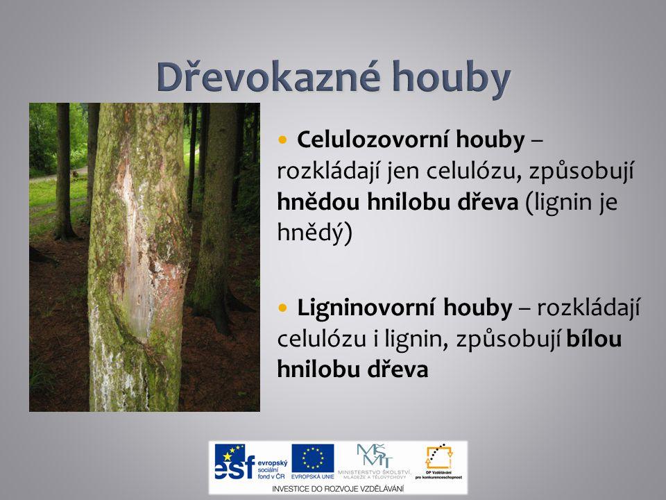 Celulozovorní houby – rozkládají jen celulózu, způsobují hnědou hnilobu dřeva (lignin je hnědý) Ligninovorní houby – rozkládají celulózu i lignin, způ