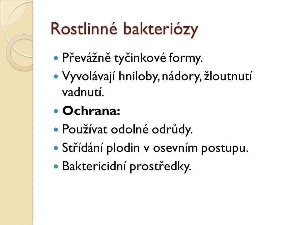 Rostlinné bakteriózy Převážně tyčinkové formy.Vyvolávají hniloby, nádory, žloutnutí vadnutí.