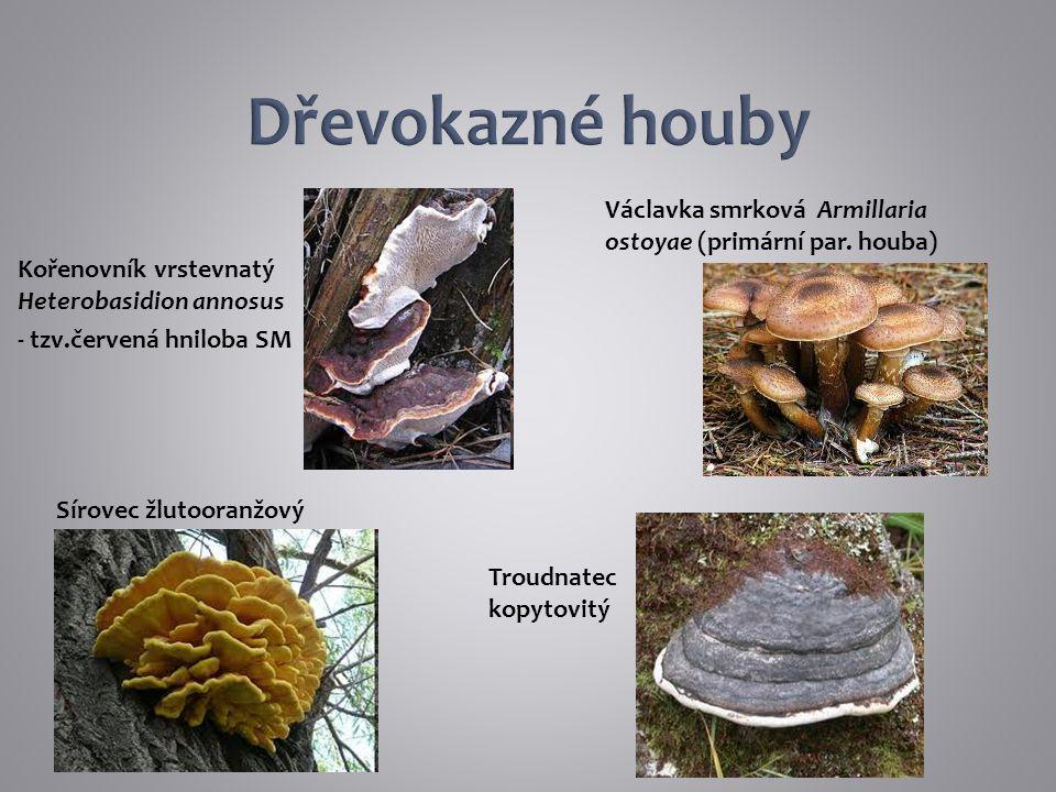 Kořenovník vrstevnatý Heterobasidion annosus - tzv.červená hniloba SM Václavka smrková Armillaria ostoyae (primární par. houba) Troudnatec kopytovitý
