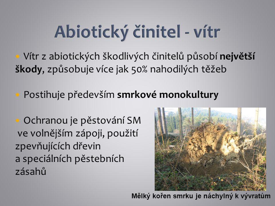 Vítr z abiotických škodlivých činitelů působí největší škody, způsobuje více jak 50% nahodilých těžeb Postihuje především smrkové monokultury Ochranou