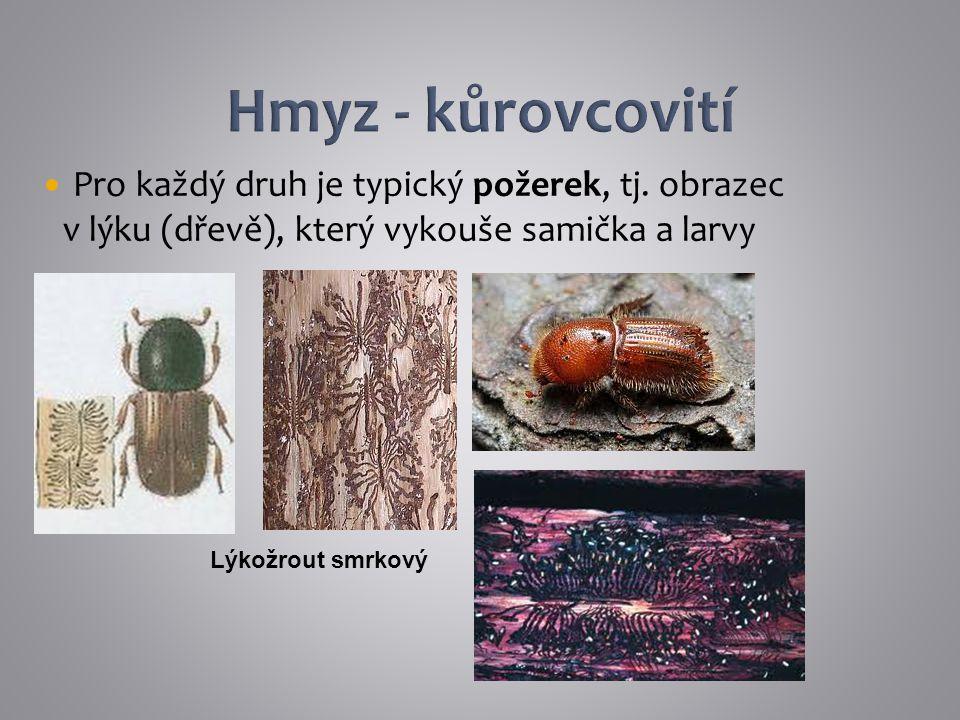 Pro každý druh je typický požerek, tj. obrazec v lýku (dřevě), který vykouše samička a larvy Lýkožrout smrkový