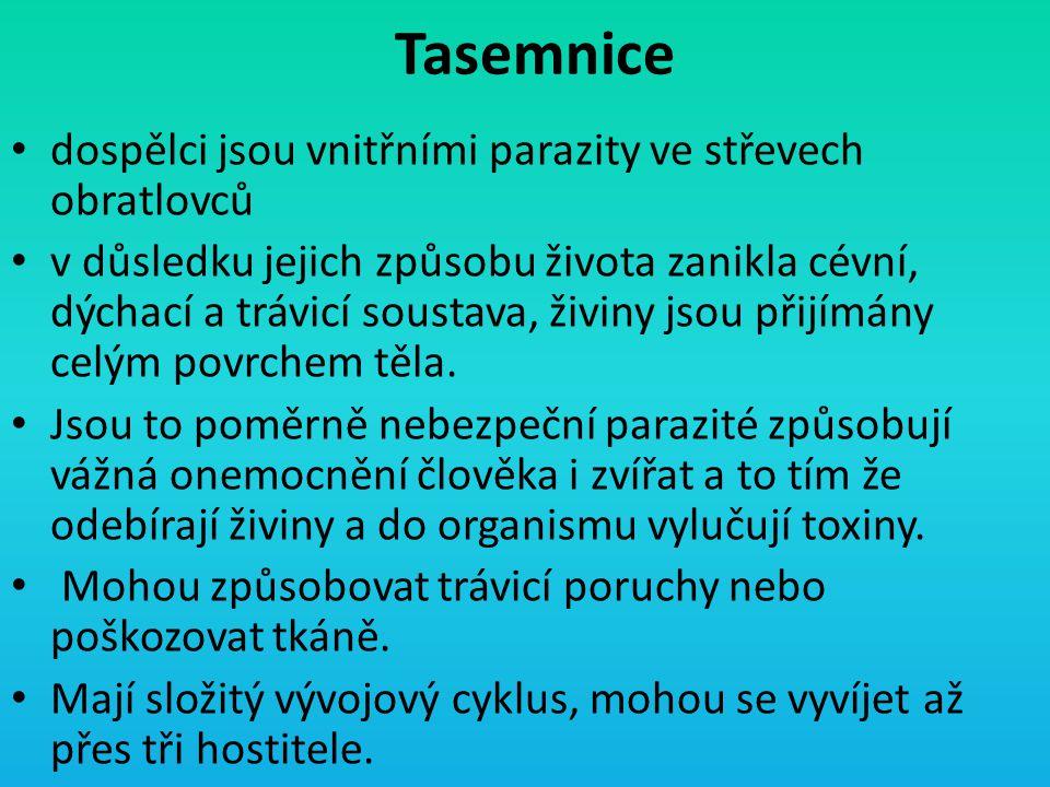 Tasemnice dospělci jsou vnitřními parazity ve střevech obratlovců v důsledku jejich způsobu života zanikla cévní, dýchací a trávicí soustava, živiny j
