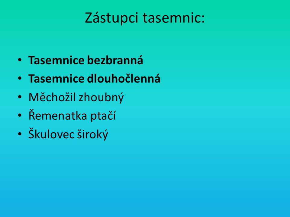 Zástupci tasemnic: Tasemnice bezbranná Tasemnice dlouhočlenná Měchožil zhoubný Řemenatka ptačí Škulovec široký
